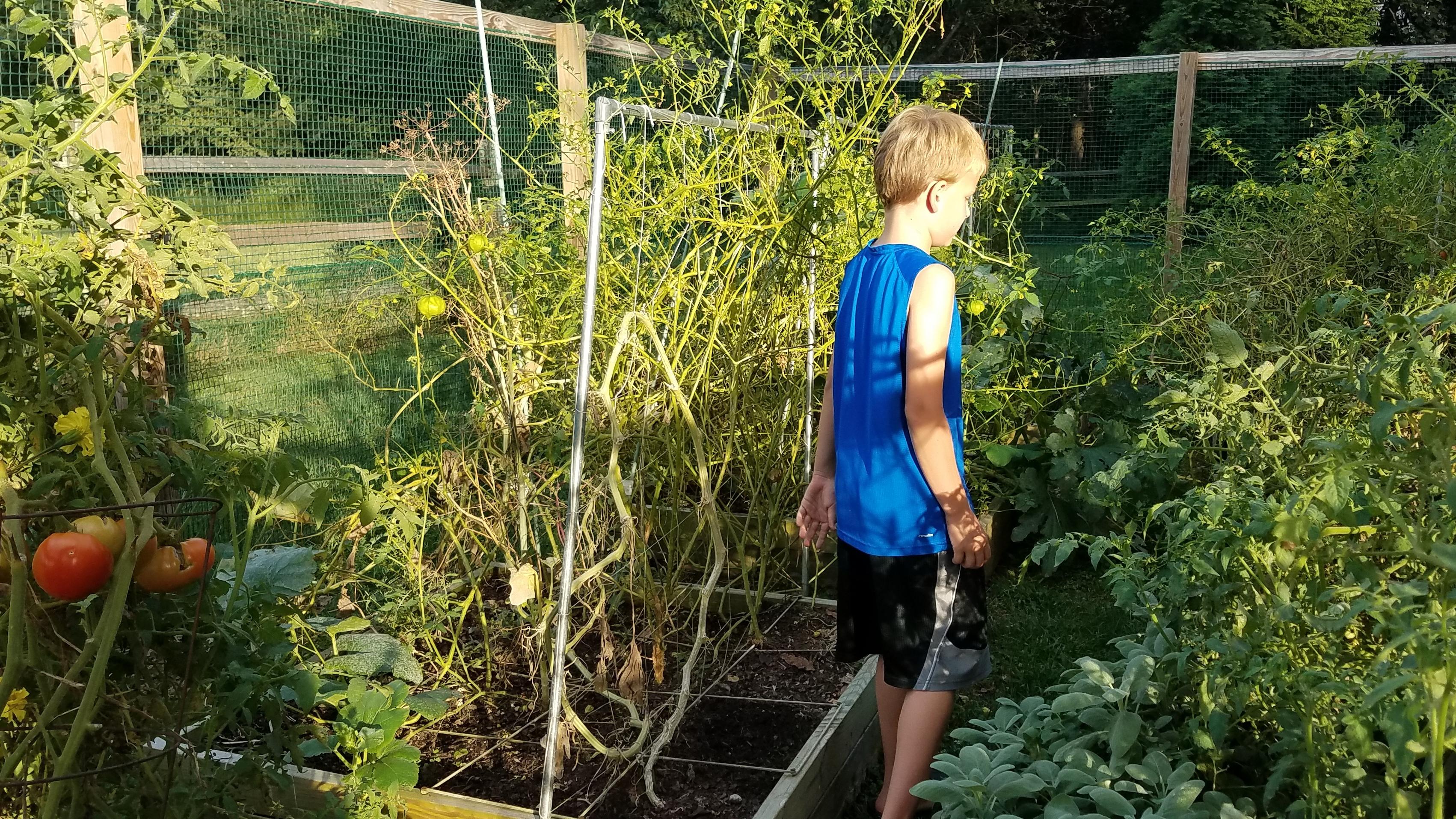 alexs-garden