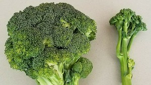 Photo of a head of broccoli and a stalk of broccolini